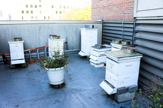 hives-on-the-roof