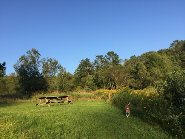 My dog, Annie, running in New Hampshire