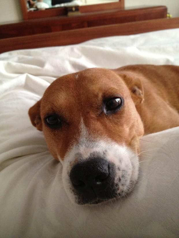 Photo of my dog, Annie